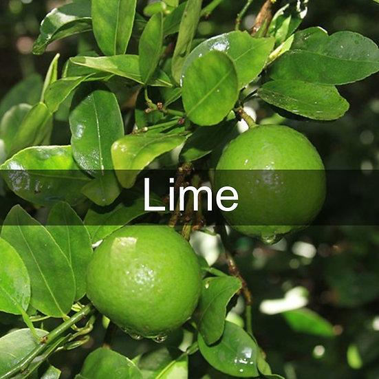 Lime Essential Oil 10ml Roller