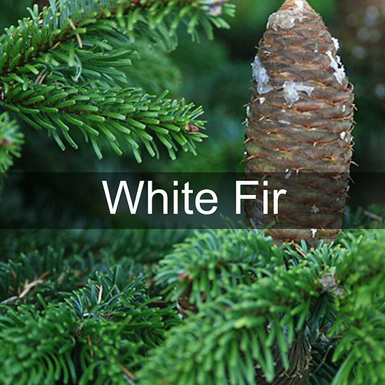 White Fir Essential Oil 10ml Roller