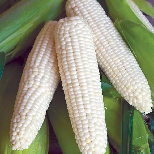 White Pearl Corn