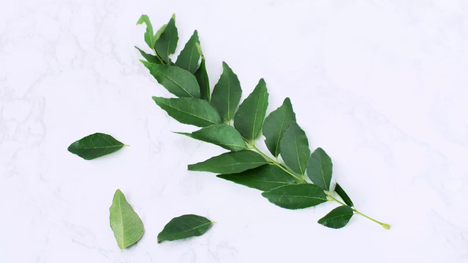 curry-leaf-stalks