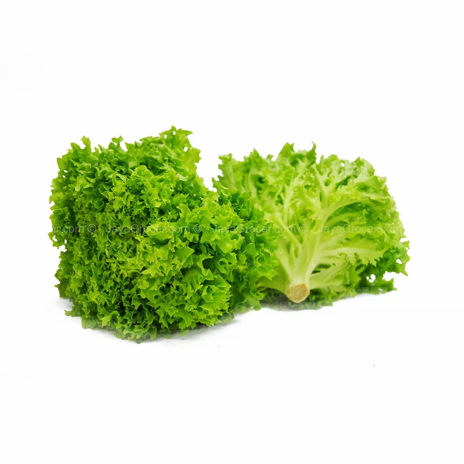 green coral lettuce