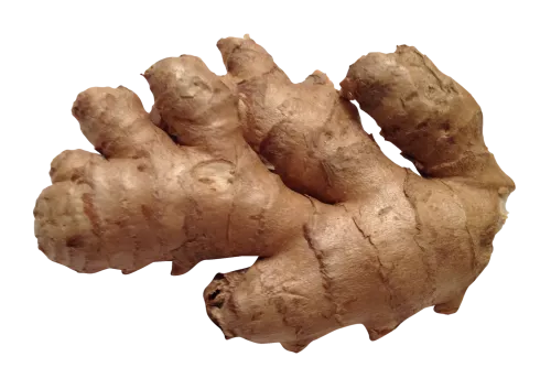 Ginger-PNG-Image1-500x353