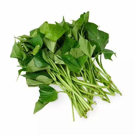 msia sweet potato leaf