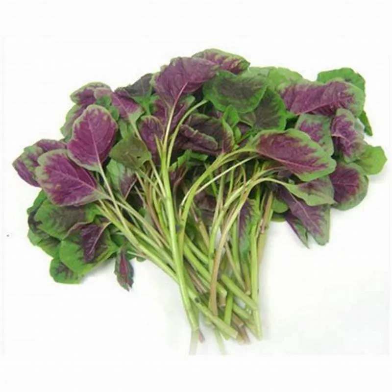 msia red spinach