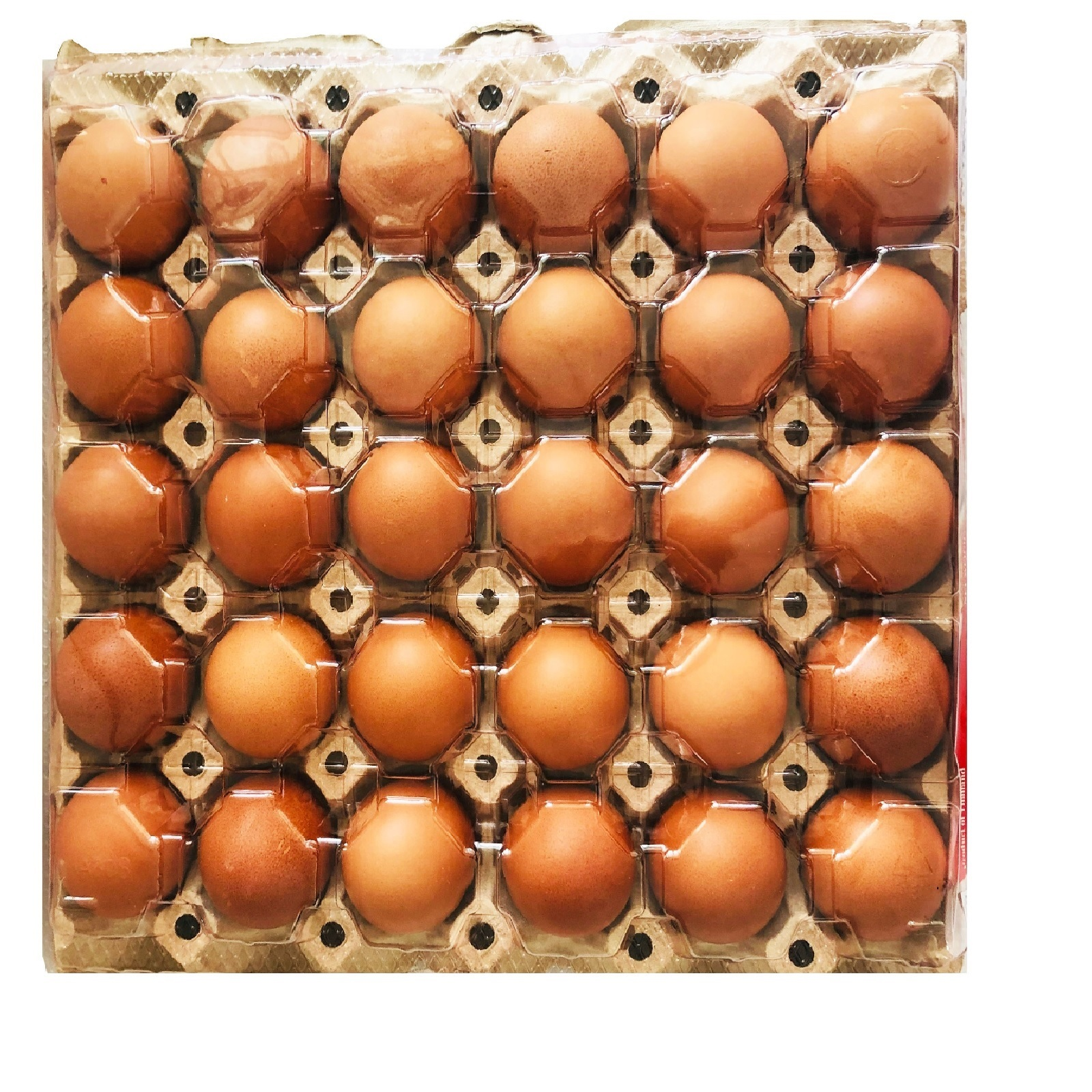 kyh fresh brown egg 30's