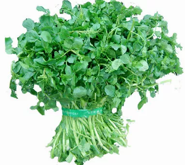 Indonesia Watercress