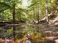 kanawha state forest.jpg