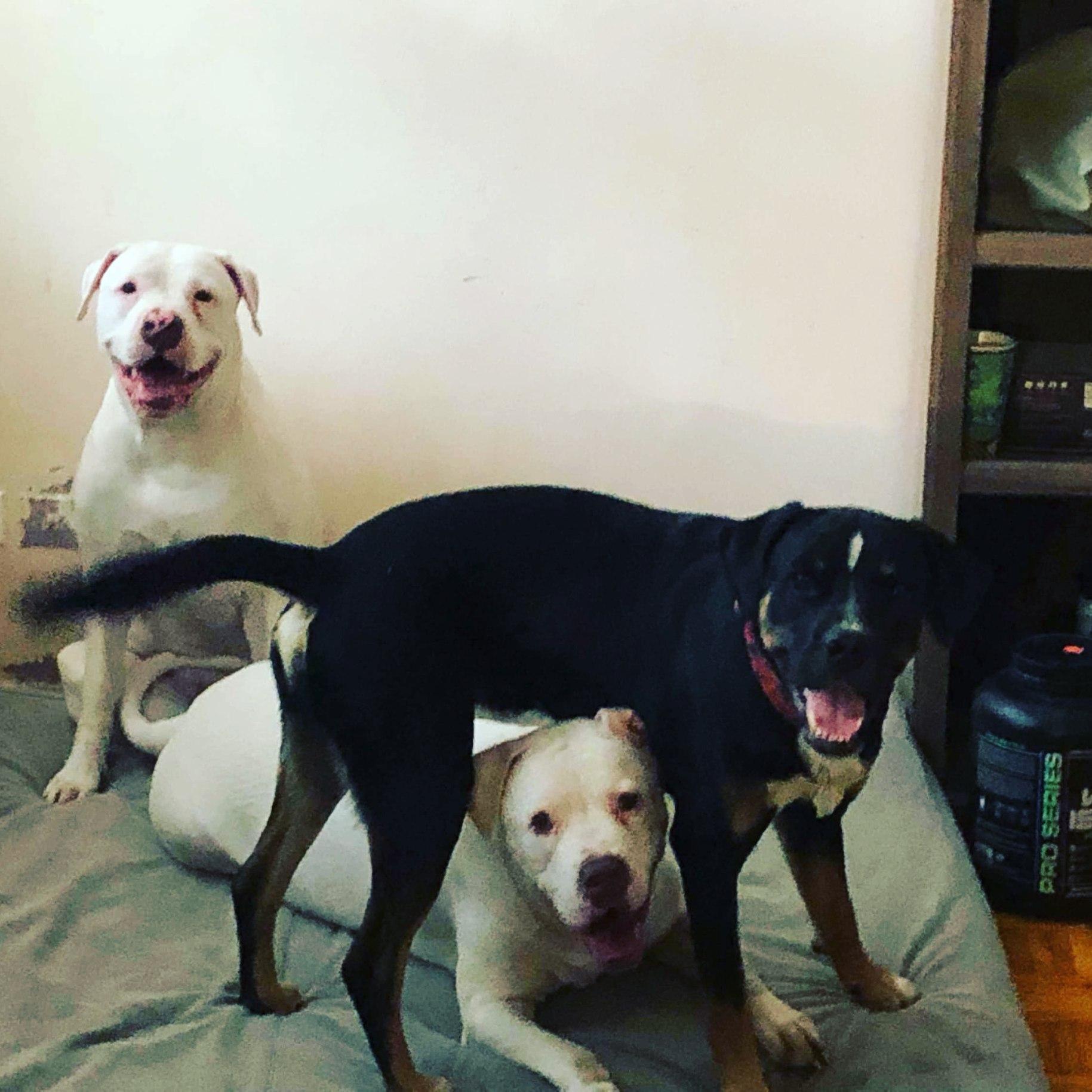 Anouk, Cyrus & Koda