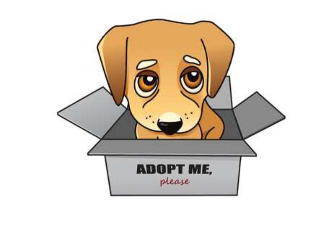 Adopting A Dog or Puppy