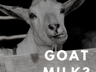 How beneficial is goat's milk?
