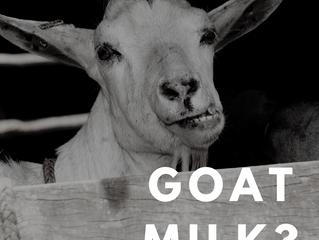 How beneficial is goat's milk?