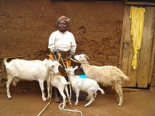 The Golden Goat