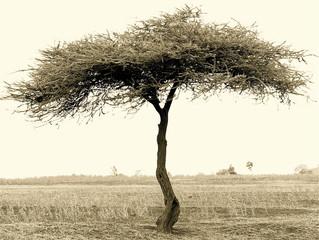 It's Dry Season