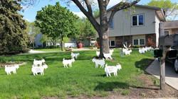 Herd its Yer Birthday!