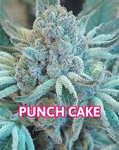 PUNCH CAKE strain.jpg