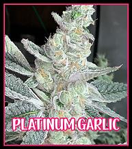 Platinum Garlic Strain.png