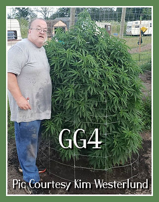 GG4 OUTDOOR IN FLOWER.jpg