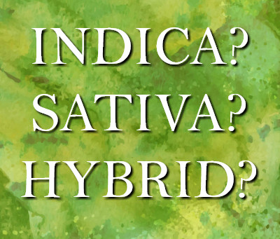 Sativa, Indica or Hybrid?