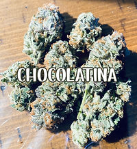 CHOCOLATINA STRAIN.jpg