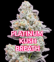 PLATINUM KUSH BREATH (2) (1) SMALL.png