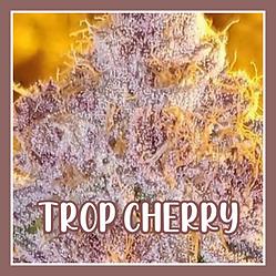 TROP CHERRY N.png