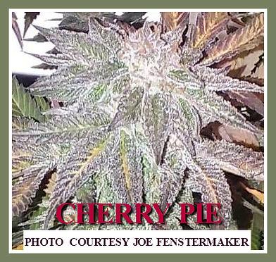 CHERRY PIE CUSTOMER PIC.jpg