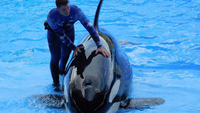 Seaworld - Fun and Educational or Torture and Exploitation