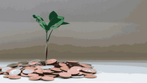 Planting wealth: exponential growth and the power of compounding