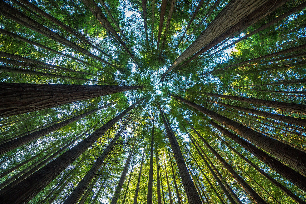 trees-forest-stock-getty.jpeg