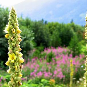 flowers-2.jpeg
