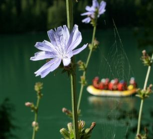 flowers-29.jpeg