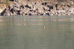 Devoção ao Rio Ganges
