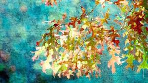 Oak Leaves Cluster
