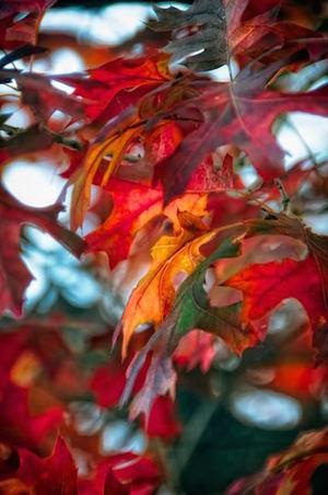 Mixed Reds