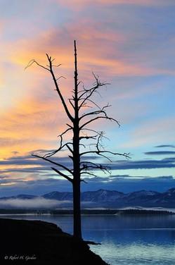 Sihouette Tree