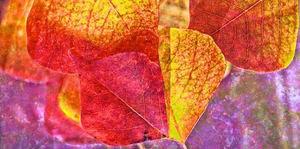 Leaves in Purple