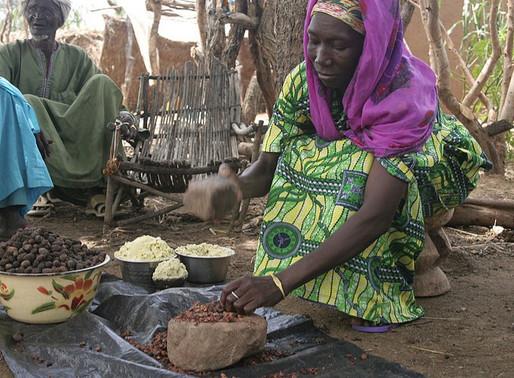 """La cosmétique 100% naturelle : un savoir-faire ancestral """"made in Africa"""""""