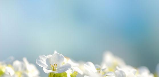 MAy-Floral-BG.jpg