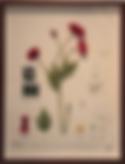 Screen Shot 2018-11-14 at 1.07.18 PM.png