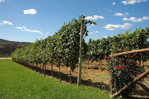 Casale Nebbia Vineyards.jpg