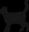 Lucky Black COVID Cat 😸