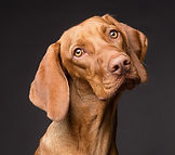 dog-3277416_1920%20copy_edited.jpg