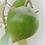 Thumbnail: Pulpa de Lúcuma Derifrut