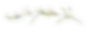 olive-leaves-251786155.png