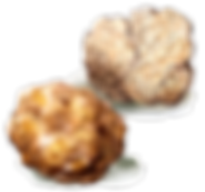 white-truffle-638730526.png