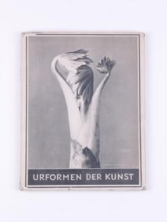 Blossfeldt (1928)