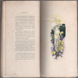RIQUERcrisantemes24