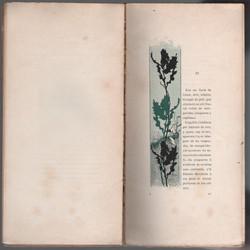 RIQUERcrisantemes11