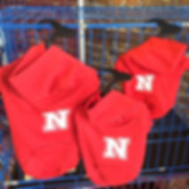 Husker Shirts for pets, Healthy Paws