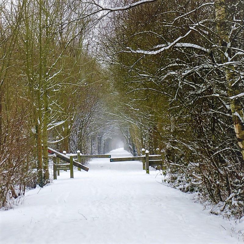 foret marchiennes hiver